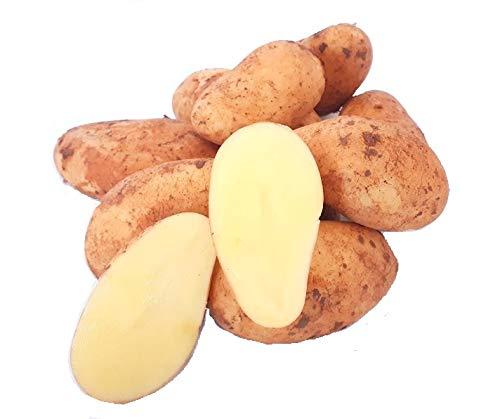 Frische Kartoffeln Speisekartoffeln Annabelle 1-25 KG neue Ernte 2020 festkochend Salatkartoffel zum Grillen für Kartoffelsalat, Pellkartoffeln, Bratkartoffeln, Pommes Frites, Butterkartoffeln