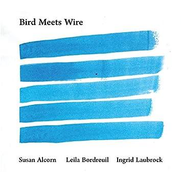 Bird Meets Wire
