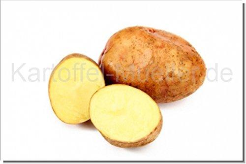 Kartoffel Müller Marabel -Neue Ernte- 10kg