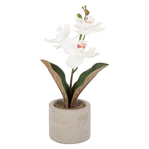 ITP Orchidée artificielle en Pot Gris 30 cm décoratifs Cadeau idéal