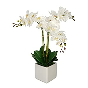 House of Silk Flowers Artificial White Triple Stem Orchid in Cube Vase (White)