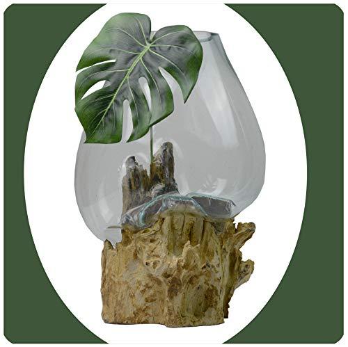 Simandra Wurzelholz Glas-Vase Wurzel-Vase Deko-Glas Kaffeewurzel Holz Design Blumenvase extra groß