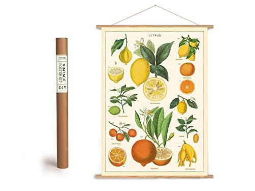 Cavallini Vintage Poster Set mit Holzleisten (Rahmen) und Schnur zum Aufhängen, Motiv Citrusfrüchte, Zitronen, Orangen