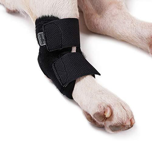 Le Chien Appareil Dentaire, Compression Jambe Avant Chien Brace, Dog Leg Wrap, Extra Soutien, Canine Arrière Jambe Hock Soutien, Protège Brace Animaux Tarse Patte De Compression Wraps,XL