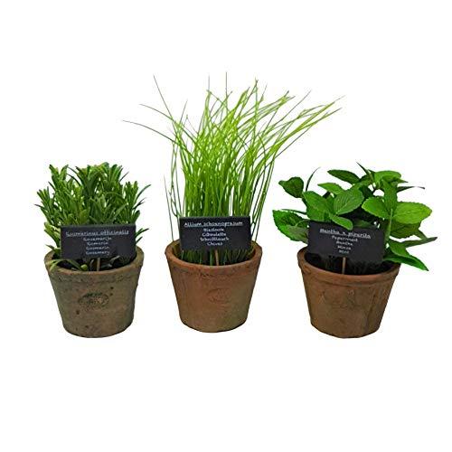 3 X ESSCHERT'S Menthe Ciboulette Romarin Artificiel Âgé Terrocatta Herbe Plantes Pots