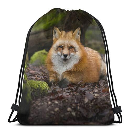 Affordable shop Fox Fox Fox Red Nature Forest Bozal Mochila con cordón, ligera, gimnasio, viajes, yoga, bolsa de hombro para senderismo, natación, playa
