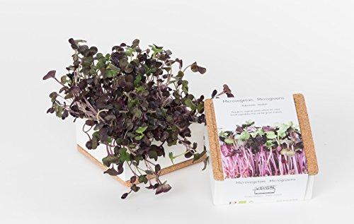 Grow Box uno Bio - Kit prêt à pousser Bio Microgreens - Superbe idée cadeau, original et décoratif - Boîte metal et couvercle liège 11x11x5 cm (Radis)