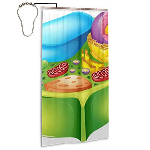 Green Plant Cell Biology Microscope Bathroom Shower Curtains With 12 Hooks Patterned Shower Curtain Machine Washable Waterproof Waterproof Shower Curtains For Home Spa Hotel Bathroom 36x72 Inches
