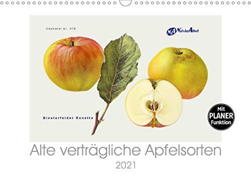 Alte verträgliche Apfelsorten (Wandkalender 2021 DIN A3 quer)