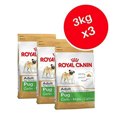 Royal Canin Mops Adult Trockenfutter für Hunde 3kg (3Stück)