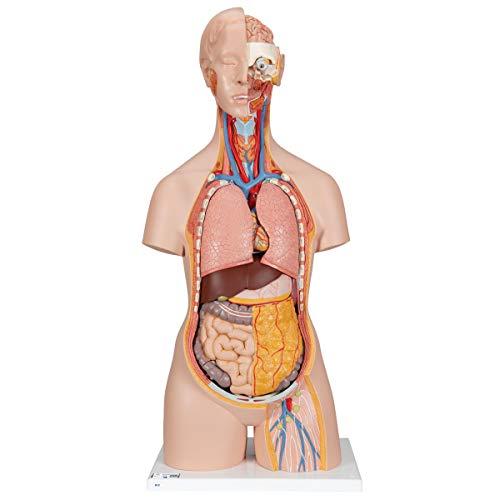 3B Scientific Menschliche Anatomie - Geschlechtsloser Klassik Torso mit geöffnetem Rücken, 18-tlg. + kostenloser Anatomiesoftware - 3B Smart Anatomy, B19