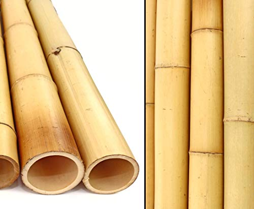 1 Stück Bambusrohr gelb, Moso Bambus, Gebleicht, Durch. 8,8-10cm, Länge 200cm