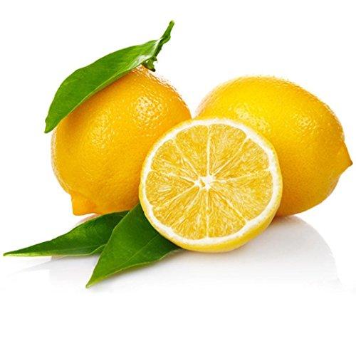 Ncient 10 pcs/Sac Graines Semences de Citronnier Citron Graines Fruits Graines à Planter Plante Rare de Jardin Balcon Bonsaï en Plein Air pour l'Intérieur et l'Extérieur