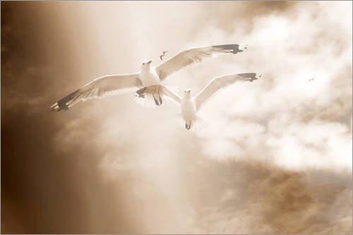 Posterlounge Acrylglasbild 30 x 20 cm: Zwei Möwen im Flug, Sepia getönt, Alaya Gadeh, Leichtigkeit von Alaya Gadeh/Mauritius Images - Wandbild, Acryl Glasbild, Druck auf Acryl Glas Bild
