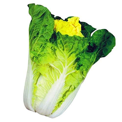 AGROBITS 200 graines/Hot Pack! Délicieux chou graines faciles à cultiver - Graines de légumes verts nourrissants ica Pekinensis de: chou A11
