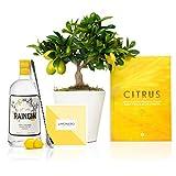 Set Regalo Funny Lemon con Limonero Lakeland 38 cm en maceta de 16 cm diámetro, libro de recetas, botella de ginebra ecológica, cuchara cocktail y guía de cuidados entregado en caja de regalo