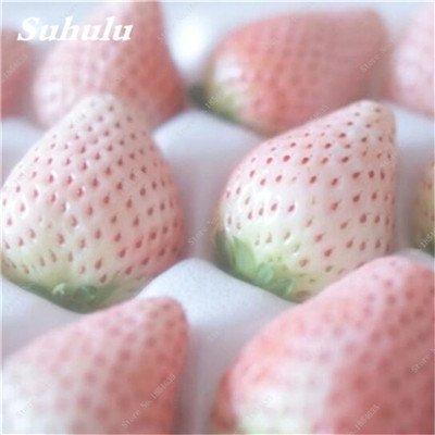 Big Promotion! 1000 Pcs Four Seasons en pot Graines Strawberry Super Sweet Seeds fruits Bonsai plantes Semences Maison et Jardin 22