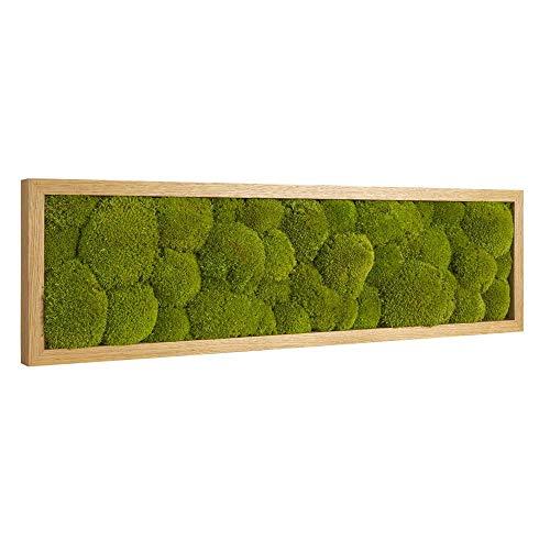 Moos Moos Manufaktur Moosbild mit Kugelmoos - Polstermoos - Ballenmoos - 70 x 20 cm mit Tischler-Holzrahmen aus geölter Eiche