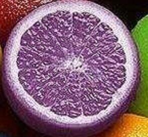 VISTARIC 7: Livraison gratuite un colis de 50 Pcs Citrus limon Graines Fruit Jardin Terrasse verger à graines Ferme famille Bonsai Lemon Seed Potted 7