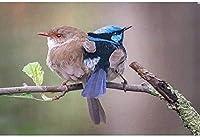 パズル500ピースジグソーパズルラージクラシック木製パズル減圧おもちゃ動物の鳥