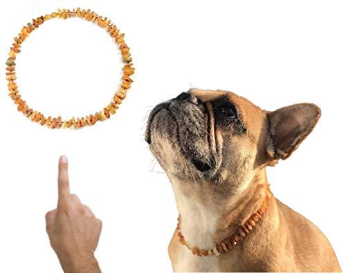 amberdog Bernsteinkette für Hunde gegen Zecken - Sonne Art.Nr.00528-XL Größe 50cm | Zecken? Zeckenschutz?