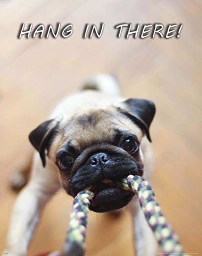 Apple Creek Hang in There Dog Cat Motivational Poster Art Print Veterinarian Groomer Gifts Treats Bones 11x14 Wall Decor Pictures