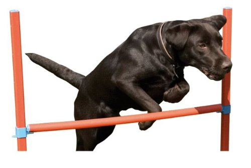 Chien Agility Obstacle Barre