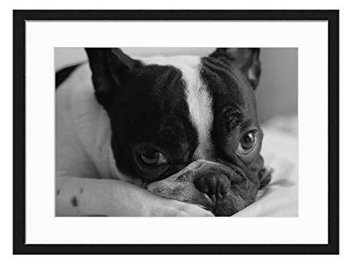Wood Framed Canvas Artwork Home Decore Wall Art (Black White 20x14 inch) - Frenchie French Bulldog Dog