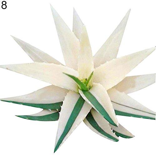 Quanjucheer 100 seltene Aloe Vera Sukkulentpflanze mehrjährige Anti-Strahlung Haus Garten Samen wunderbare Gartengeschenke