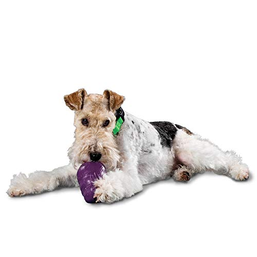 PetSafe Busy Buddy Squirrel Dude Dog Toy - Treat Dispensing Toy  Extra Small, Small, Medium and Large Sizes