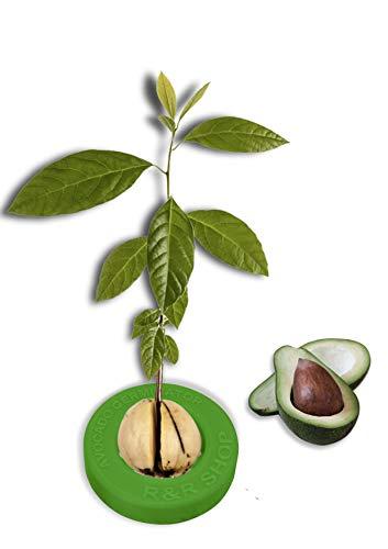 R&R SHOP Avocado Kit Germinator - Schwimmender Topf für die Avocado-Keimung, Samenwachstumskit, 100{f3ad6aa4e73561b0616e94dac52c49873cb0469f455eacbe1b80bbfa14775a28} recycelbarer und zusammensetzbarer Maisplastik (Grün)