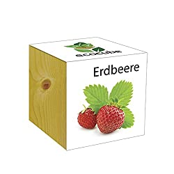 Holzwürfel – Ecocube – Erdbeere