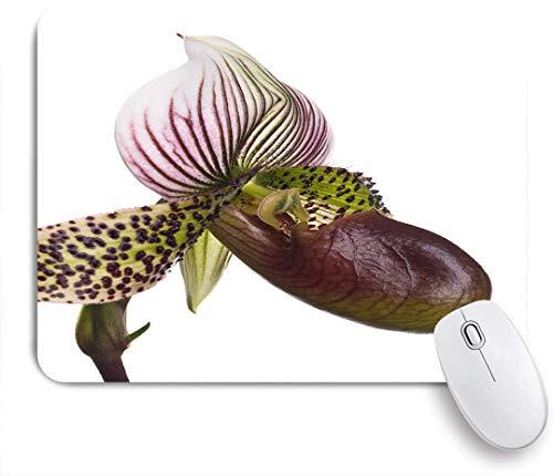 Marutuki Gaming Mouse Pad Rutschfeste Gummibasis,Dame Pantoffel Orchidee Hybrid Nahaufnahme Seitenansicht auf Weiß,für Computer Laptop Office Desk,240 x 200mm