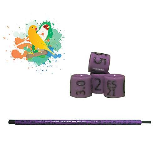 nestQ Anillas Canarios 2021 Color Violeta Federativo Policromo Grabado Laser Cerradas 3.0 mm Numeradas con Año Marcado 1 Tira 25 Anillas