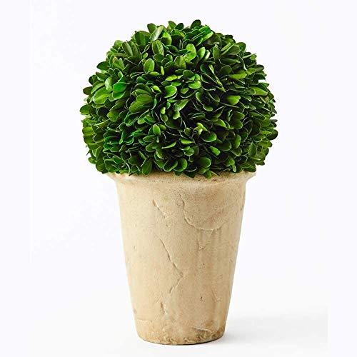BoxwoodWorld Buchsbaum-Pflanze für Heimdekoration, klassischer Ball auf Topf, 27,9 cm hoch, Grün 7 Bxowood Ball auf Topf