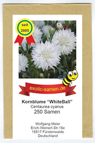Centaurea cyanus - Bienenweide - Weiße Kornblume
