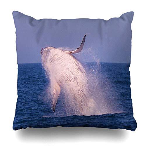 Throw Pillow Cover Blue Active Humpback Whale Breaching Australia Action Breach Fin Giant Jump Leap Design Home Decor Pillow Case Square Zippered Pillowcase Fundas para Almohada 18x18Inch(45cmx45cm)