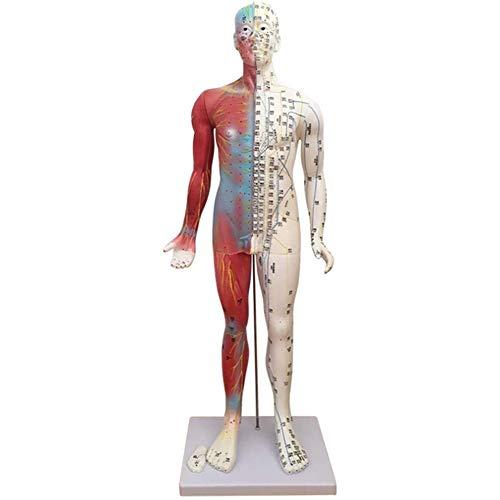 DDT 85 cm Mensch Akupunkturmodell, Wissenschaftlich Menschliche Anatomie, Punkt Massage Lehren Erläuterung Bildung Werkzeug,A