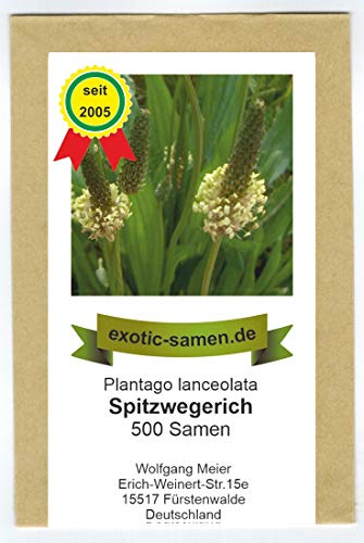 Spitzwegerich - Plantago lanceolata - Bienenweide - Arzneipflanze des Jahres 2014-500 Samen