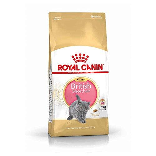 Royal Canin KITTEN British Shorthair Katzenfutter 2 kg, 1er Pack (1 x 2 kg)