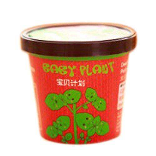1pcs Mini Creative pot plants de tomates chili graines de tournesol et plantes de légumes plante miniature jardin maison cadeau bébé en pot de piment