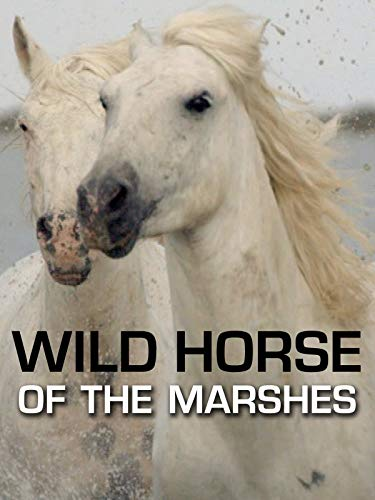 The Wild Horse of the Marshes