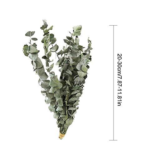 Eukalyptus getrockneter Blumenstrauß, nordischer Eukalyptus getrocknete Blumenzweige, natürlich getrocknete Simulation Bouquet Dekoration, Heimdekoration, 20-30cm