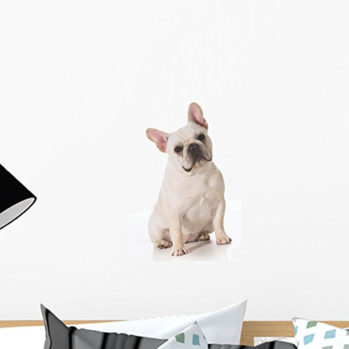 Wallmonkeys French Bulldog Wall Decal Peel and Stick Graphic WM160580 (18 in H x 12 in W)