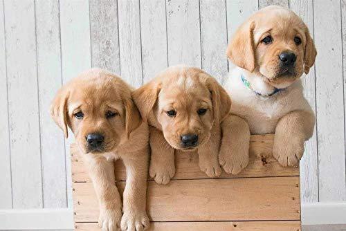 ZFSXmas Puzzle in Legno per Adulti e Bambini Cuccioli Golden Retriever Gioco Fai-da-Te Regalo Antistress per Bambini (1000 Pezzi)