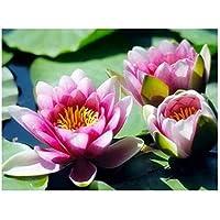 aksldf DIY蓮の花ダイヤモンド刺繡フルディスプレイダイヤモンド絵画植物ラインストーンのモザイク画像ダイヤモンドアート絵画-30x40cmフレームなし