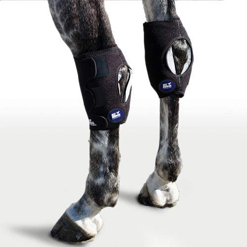 Ice Horse Single Hock Wraps for Equine - Ic Overseas parallel import regular item 3 Brand Cheap Sale Venue with Comes Therapy