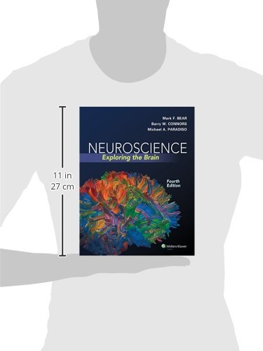 Neuroscience: Exploring the Brain Fourth, North Americ Edition by Bear PhD, Mark F., Connors PhD, Barry W., Paradiso PhD…