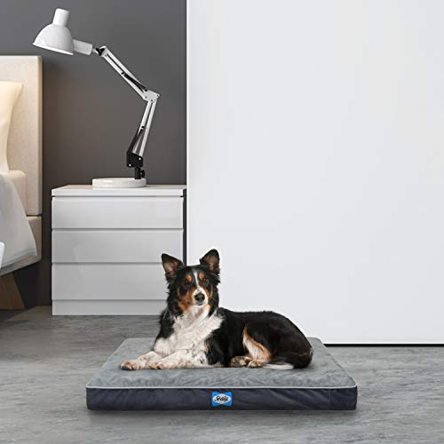 Sealy Ultra Plush Dog Bed - Orthopedic Foam pet Bed with Machine Washable Plush Cover