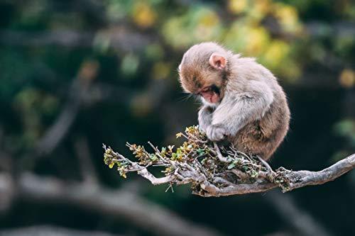 Puzzles Monkey Tree